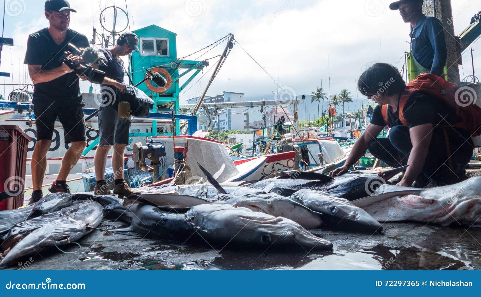 Download Состыкованная рыбацкими лодками гавань Chenggong удя извлекает липкую жидкость рыбной ловли Редакционное Изображение - изображение насчитывающей раскосно, марина: 72297365