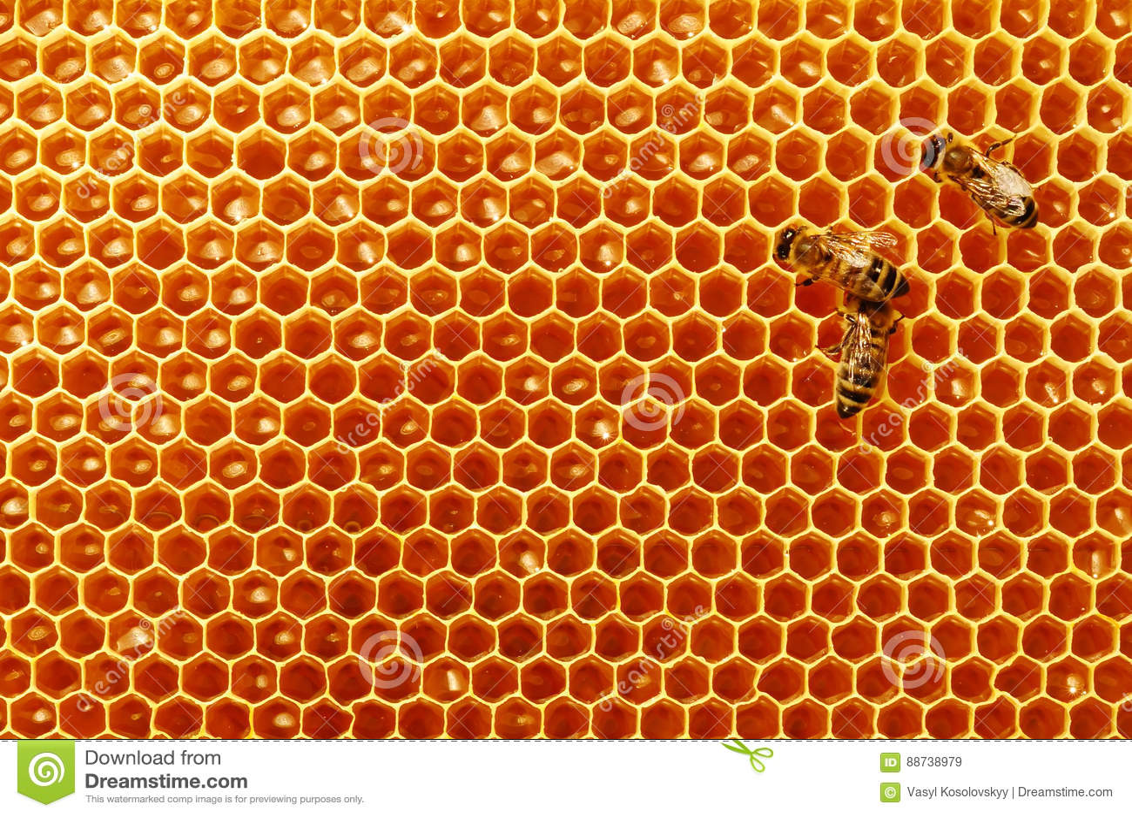 Соты пчелы с медом и пчелами Apiculture