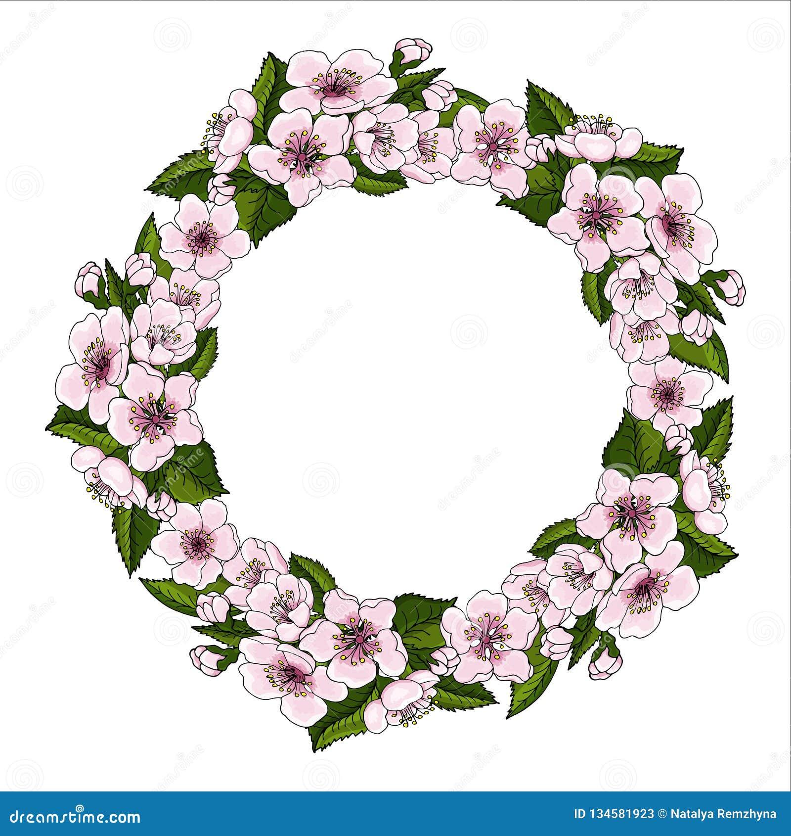 Сочный венок розовых цветков вишни и ярко листьев вишни зеленого цвета на белой предпосылке