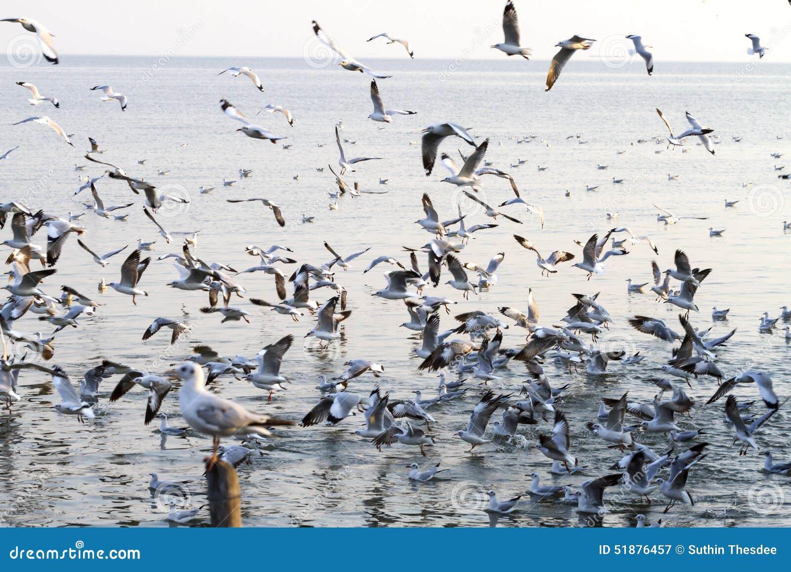 Солнечность налёт чайки группы