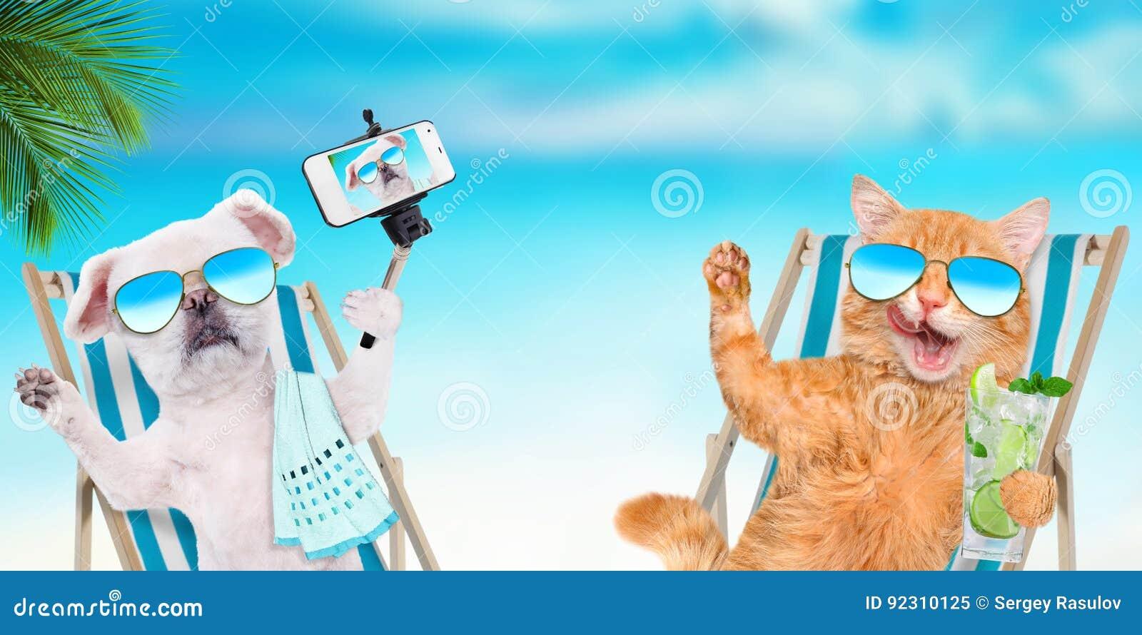 Солнечные очки кота и собаки нося ослабляя сидеть на deckchair