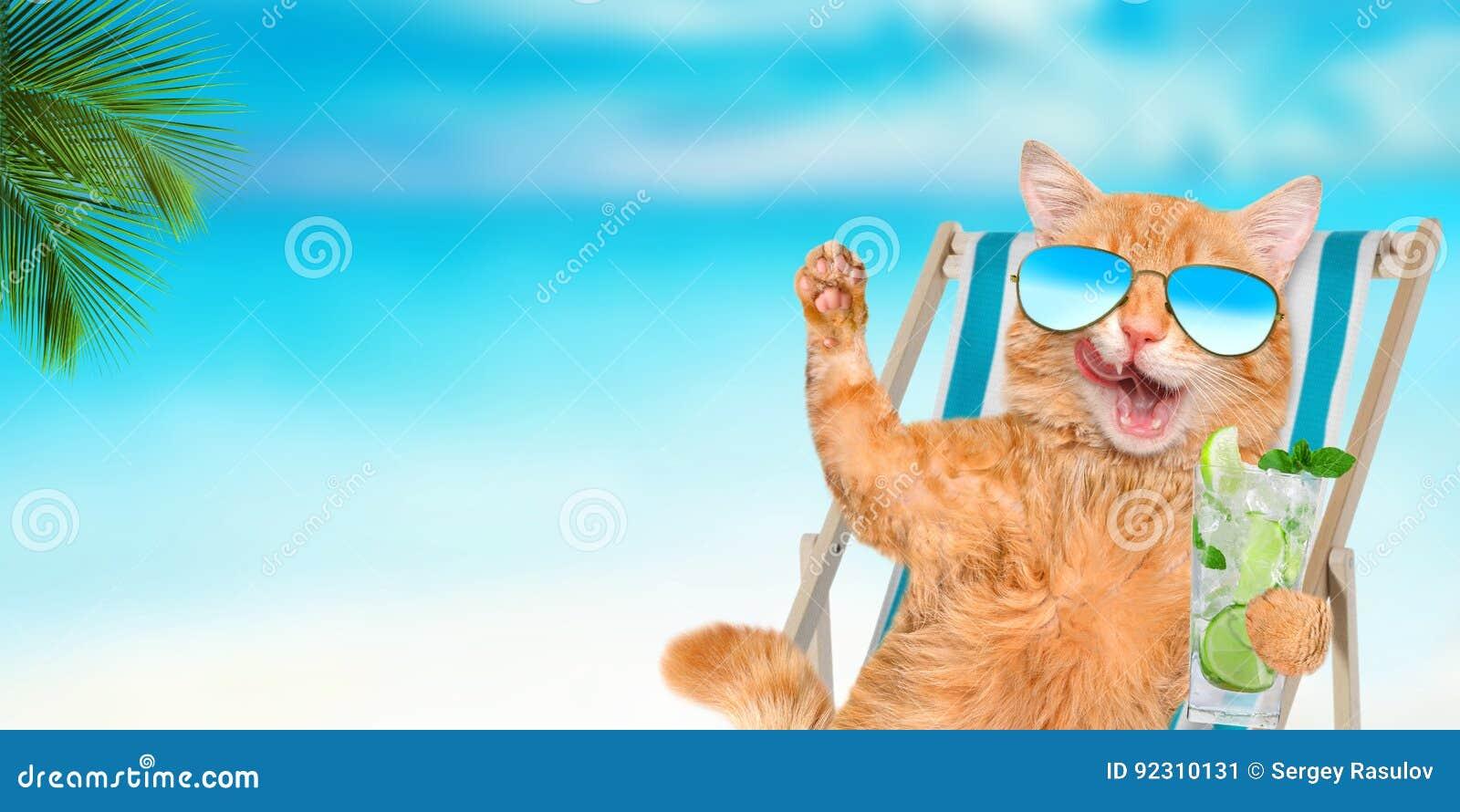 Солнечные очки кота нося ослабляя сидеть на deckchair