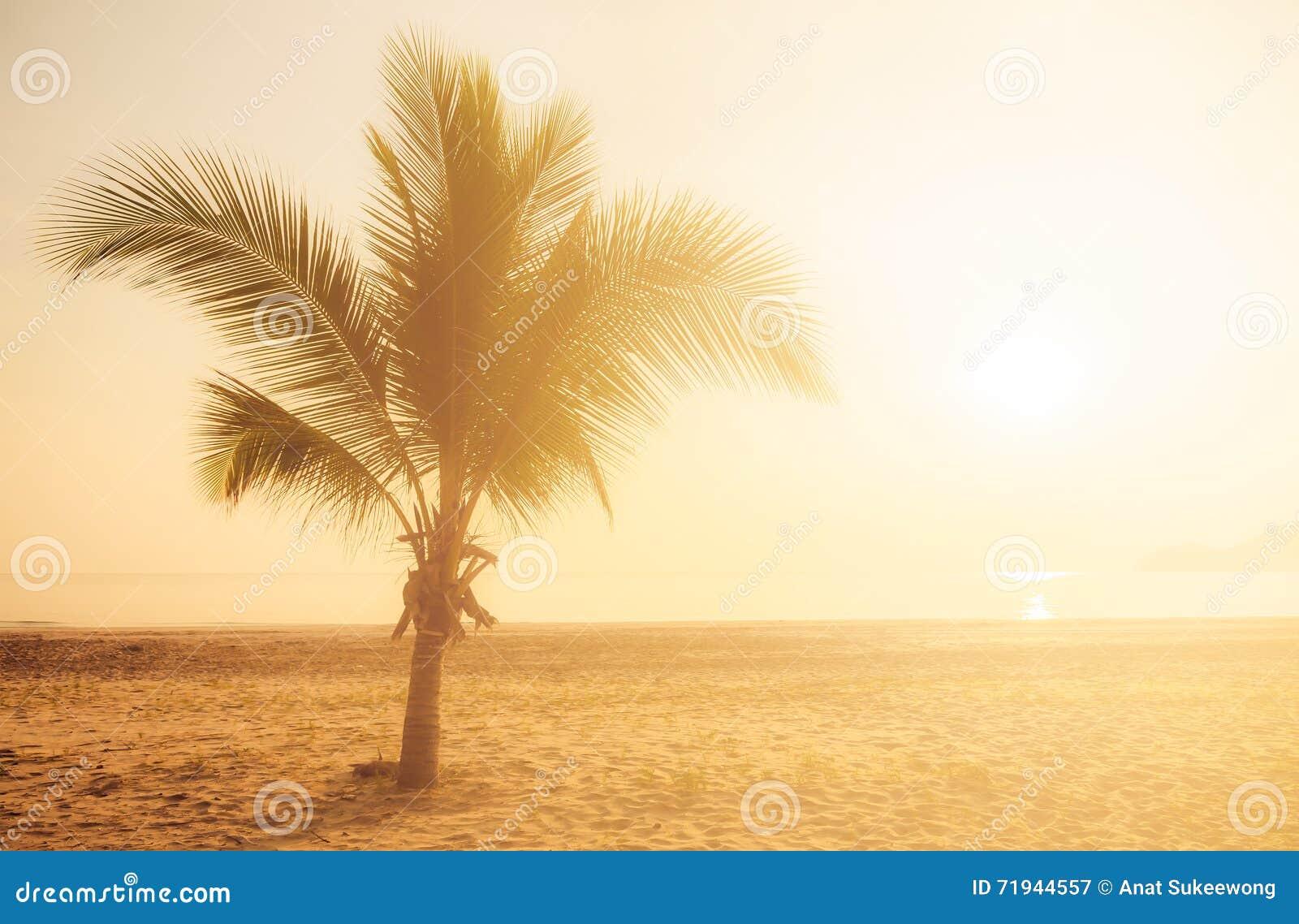 Солнечный свет на пляже