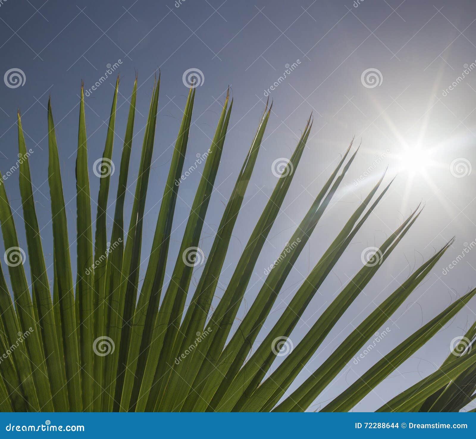 Download Солнце Shing через Fronds ладони Стоковое Фото - изображение насчитывающей небо, fronds: 72288644