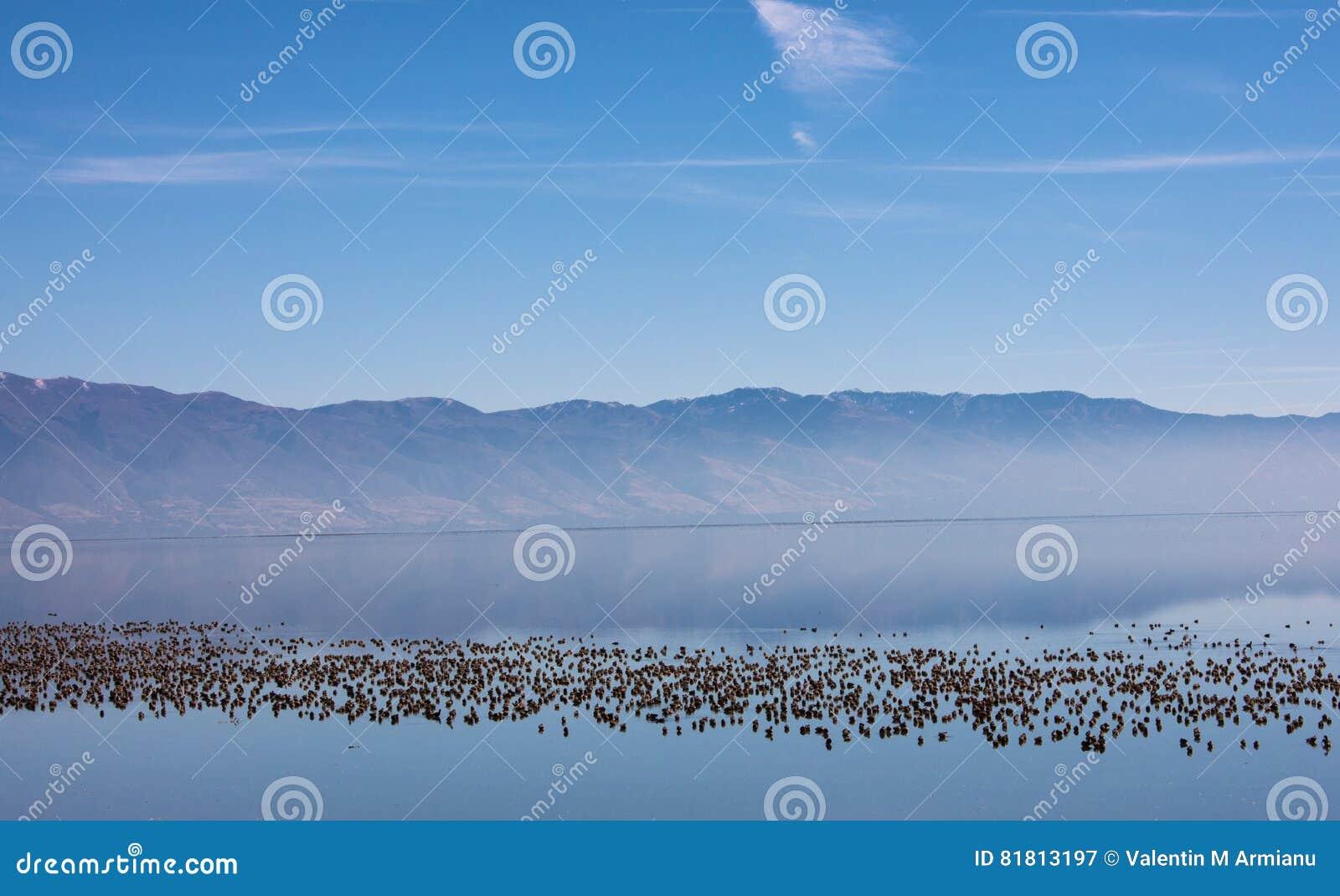 соль большого озера