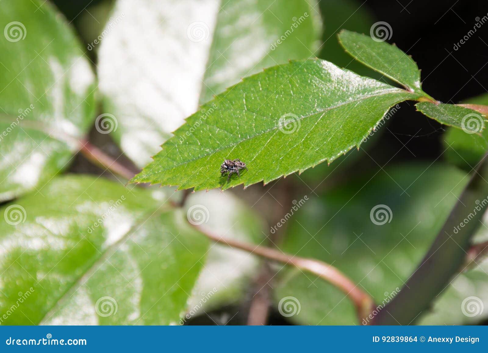 Спайдер на листьях