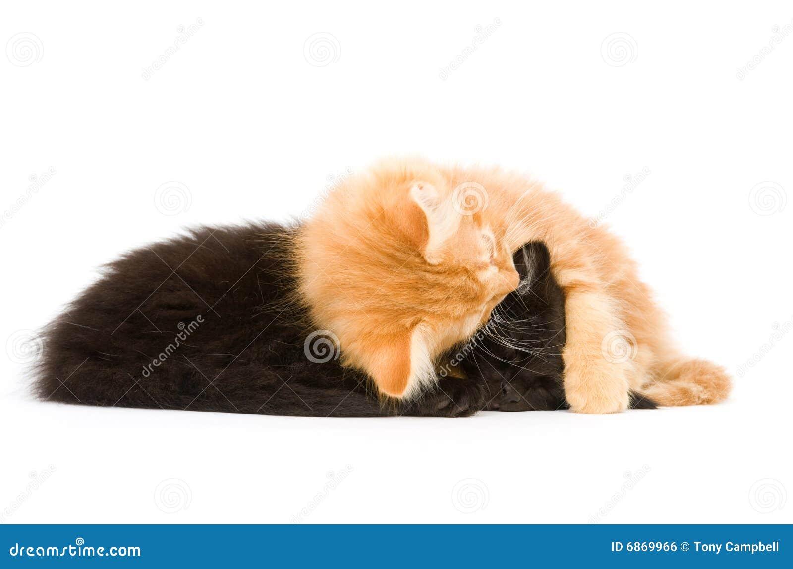 спать котят