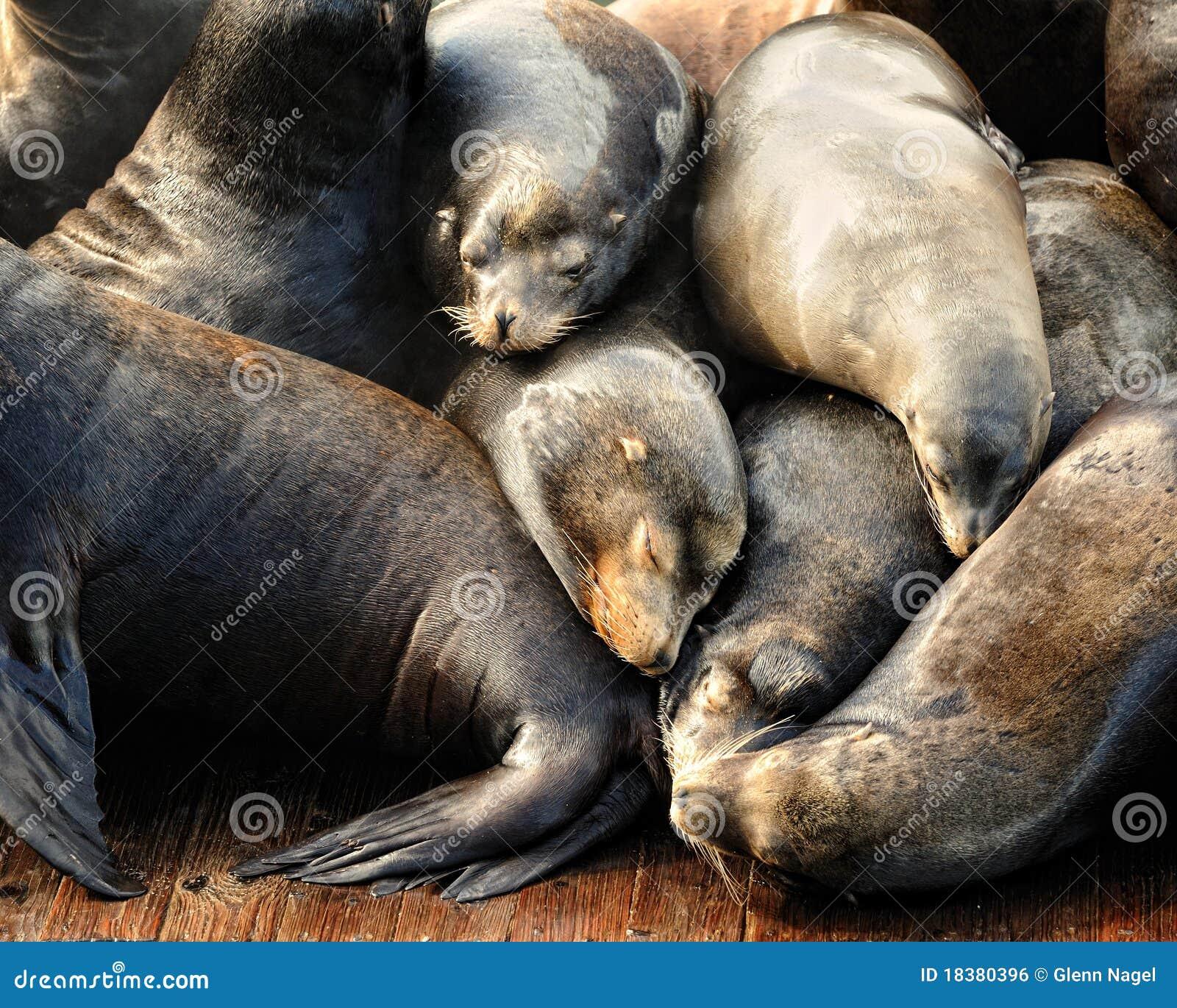 спать моря кучи львов