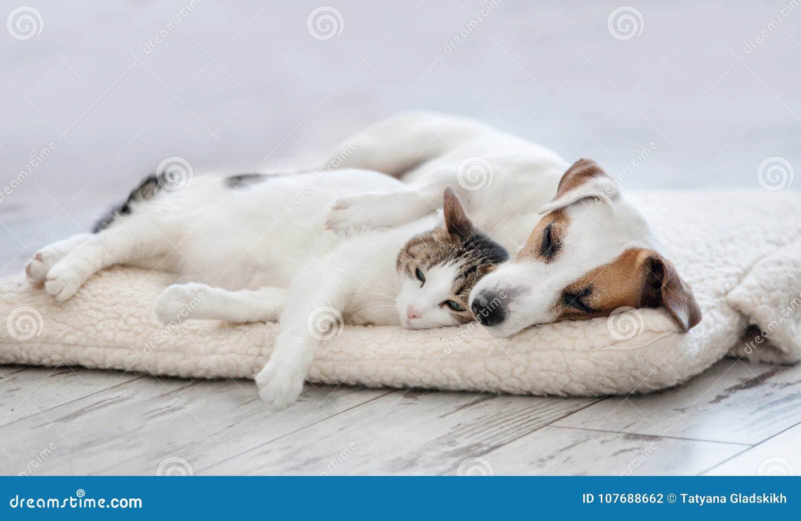 спать собаки кота