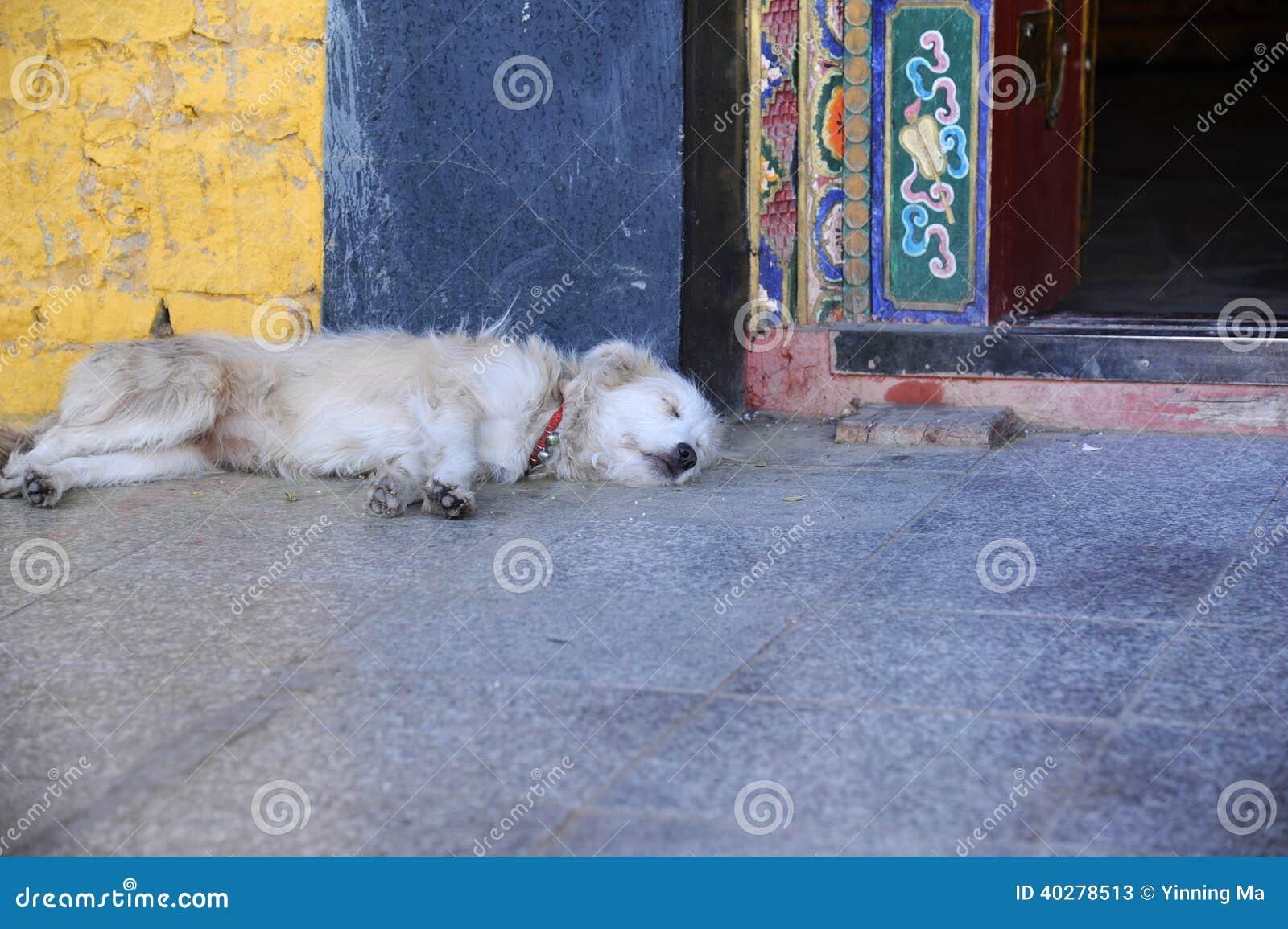 Спать собаки