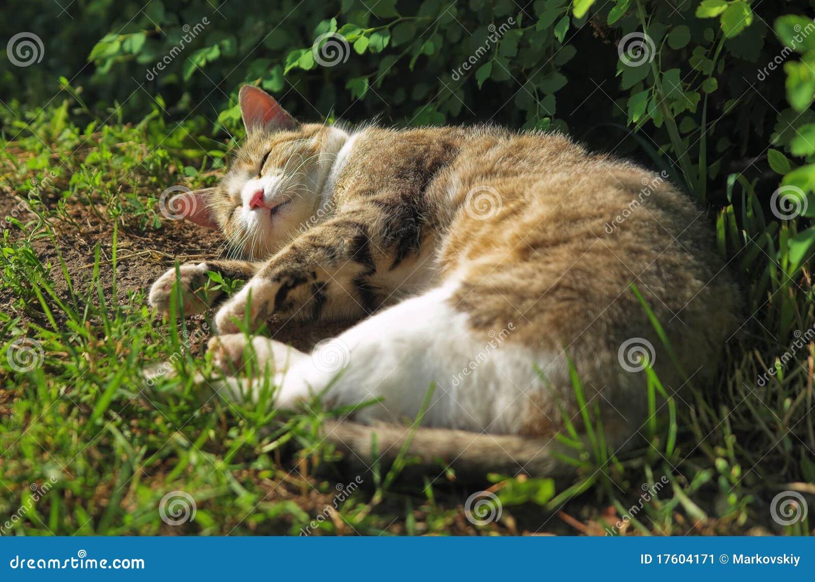спать травы кота