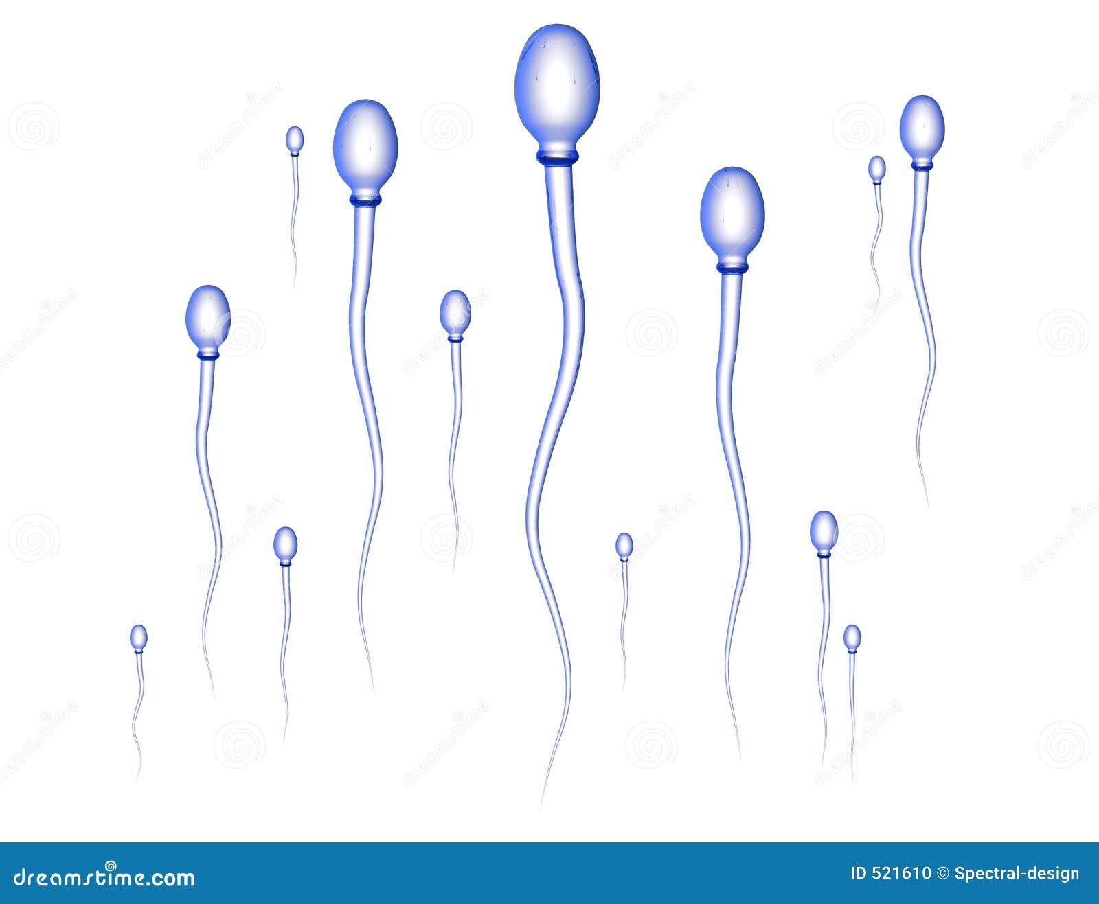 сперма гонки