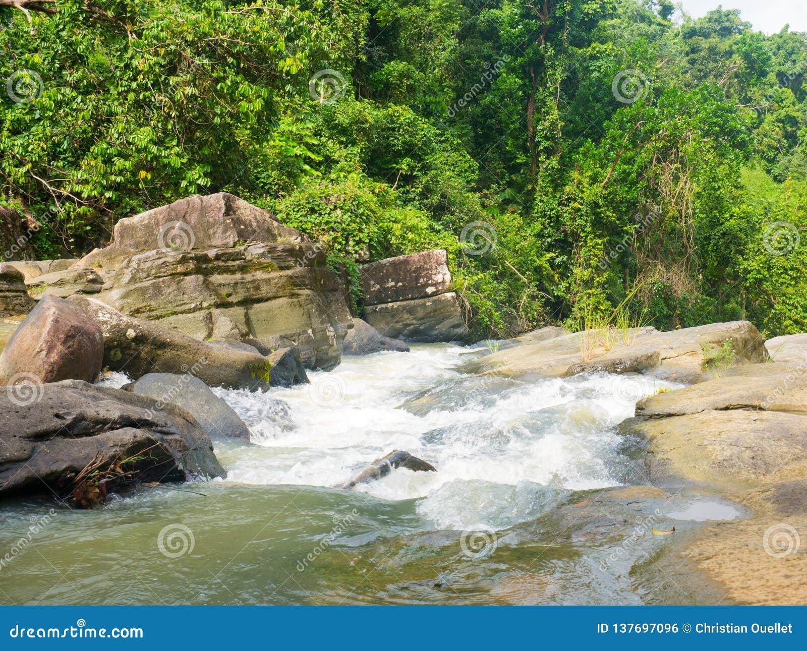 Спеша вода и река в национальном лесе El Yunque