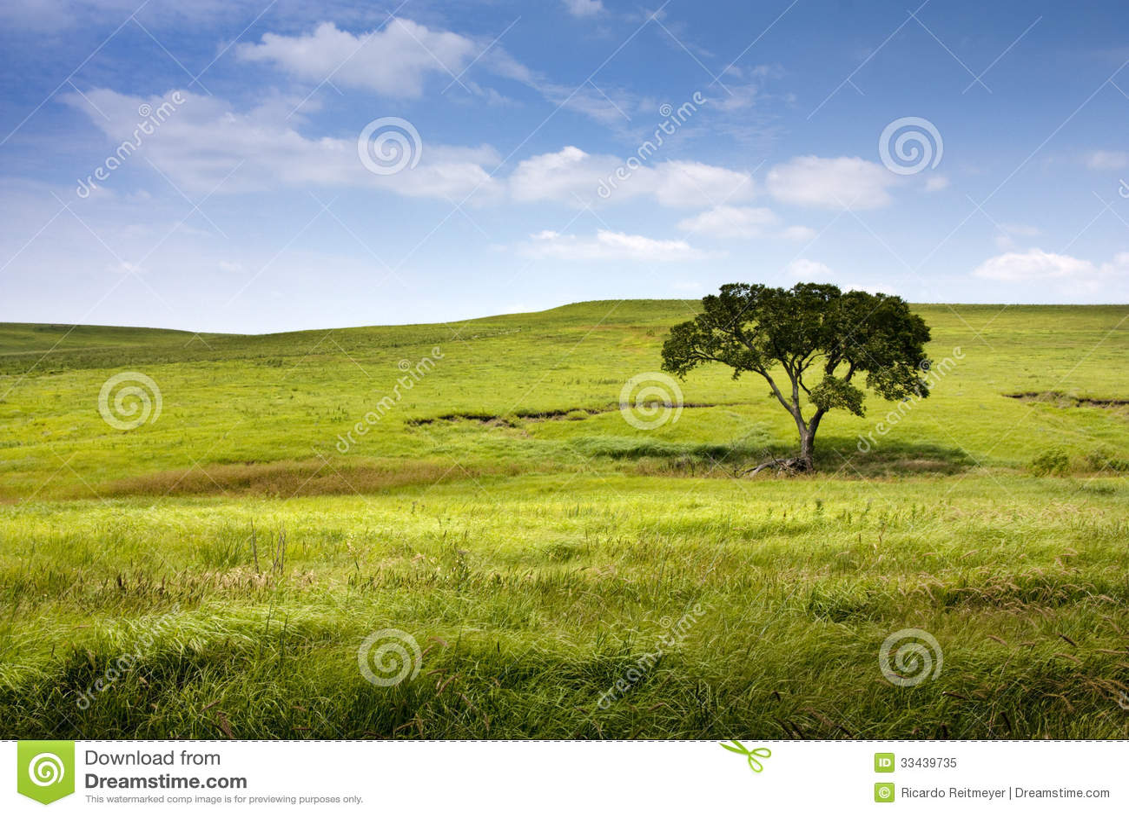 Спокойный ландшафт природы заповедника прерии midwest Канзаса Tallgrass