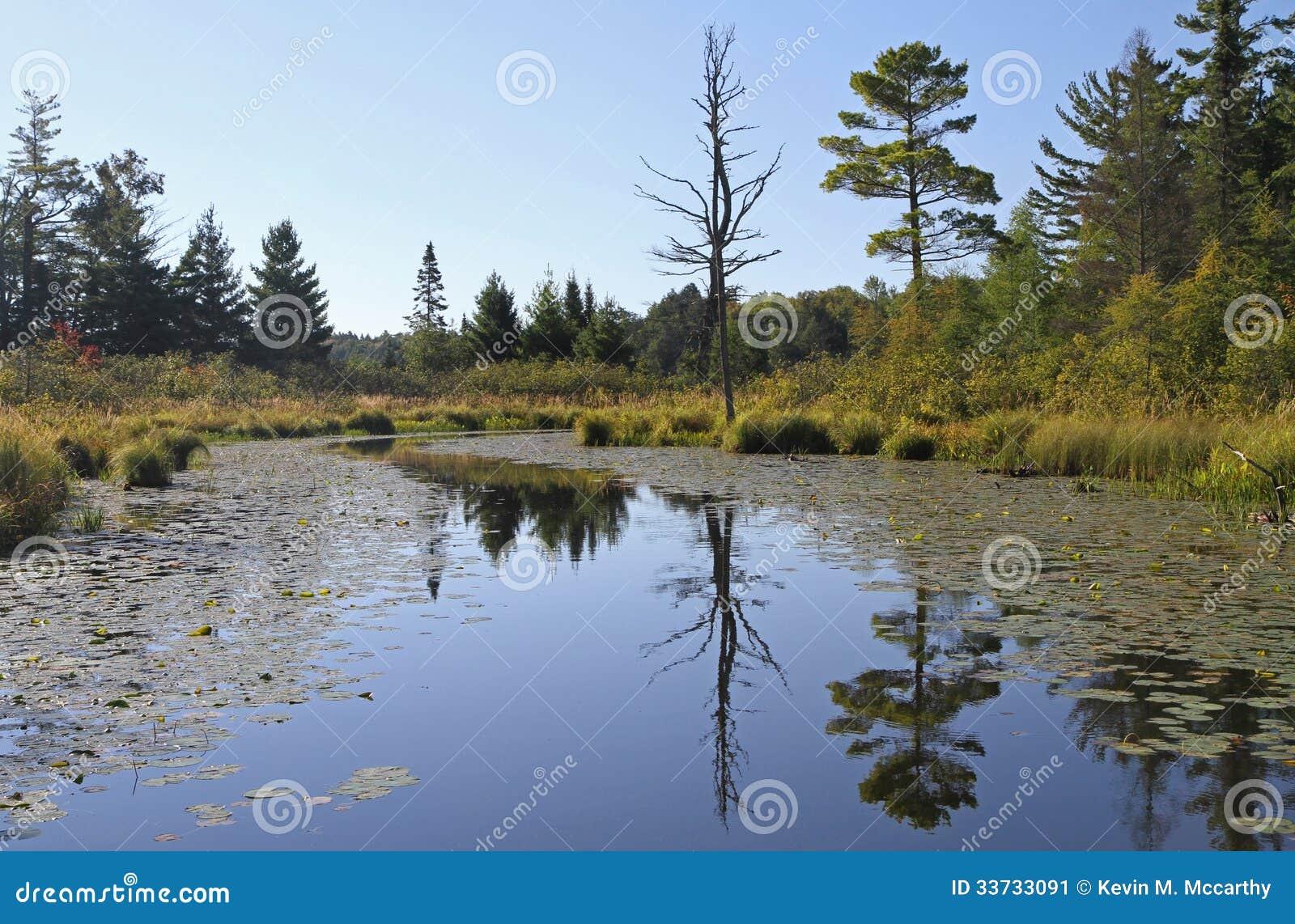 Спокойный водный путь глуши с отражениями