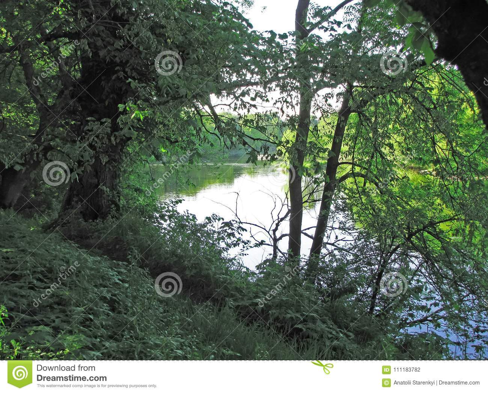 Спрятанное река для ветвей деревьев