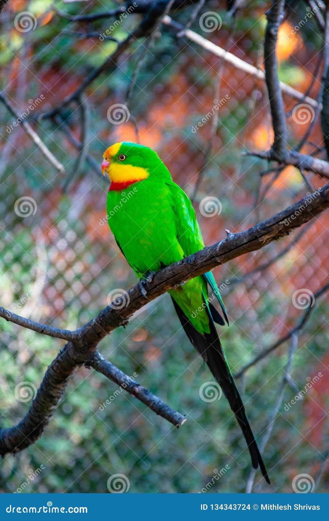 Стадный попугай сидя в ветви дерева в зоопарке Праги, чехии
