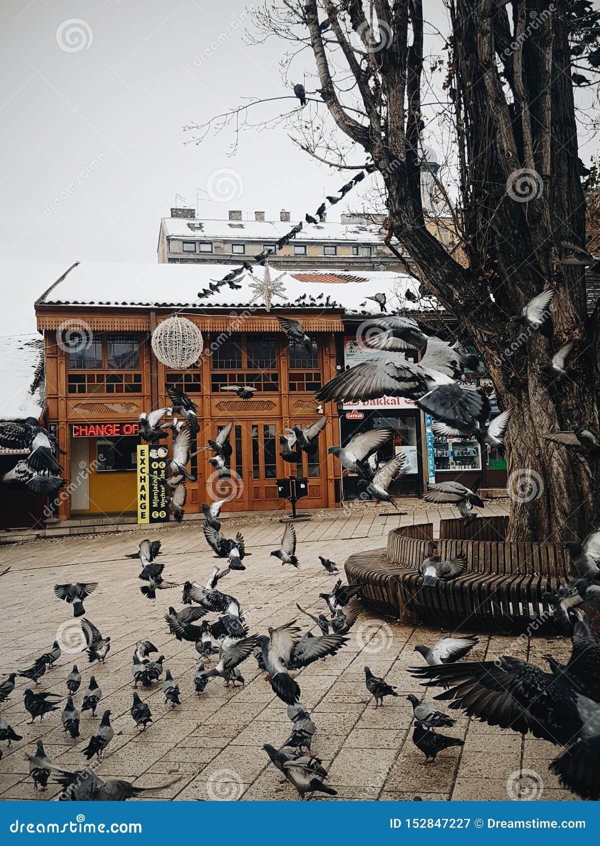 Стадо голубей летая вокруг