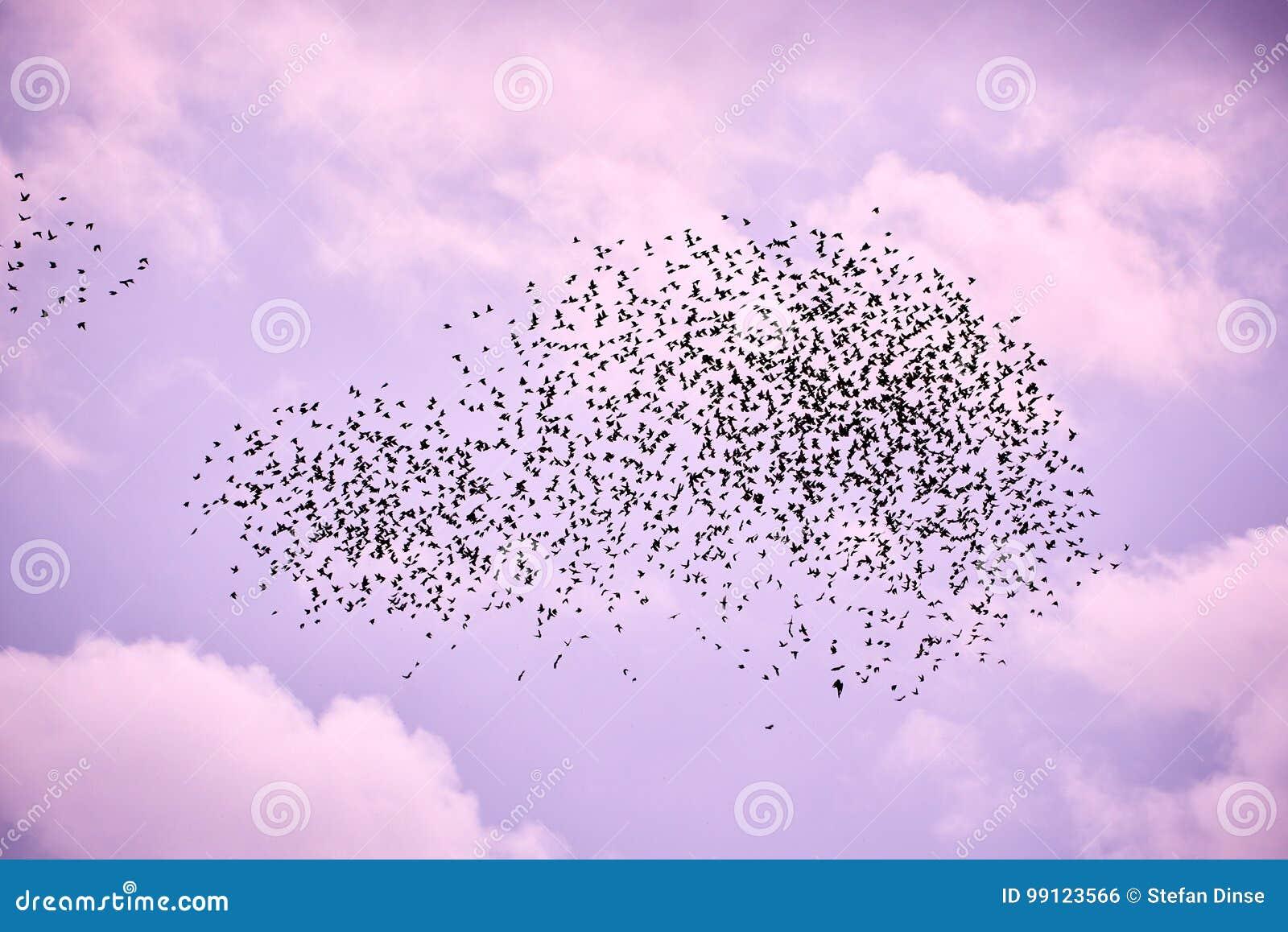 Стадо птиц в небе сирени