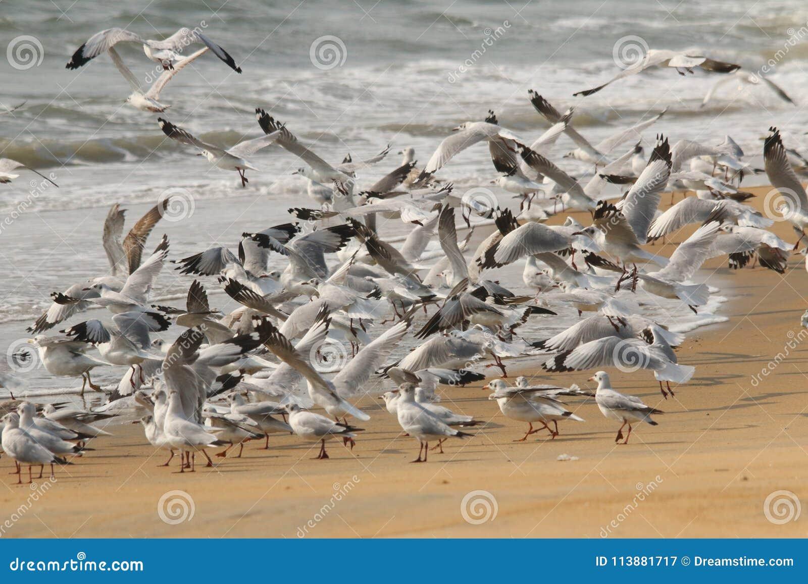 Стадо чайки в взлете пляжа