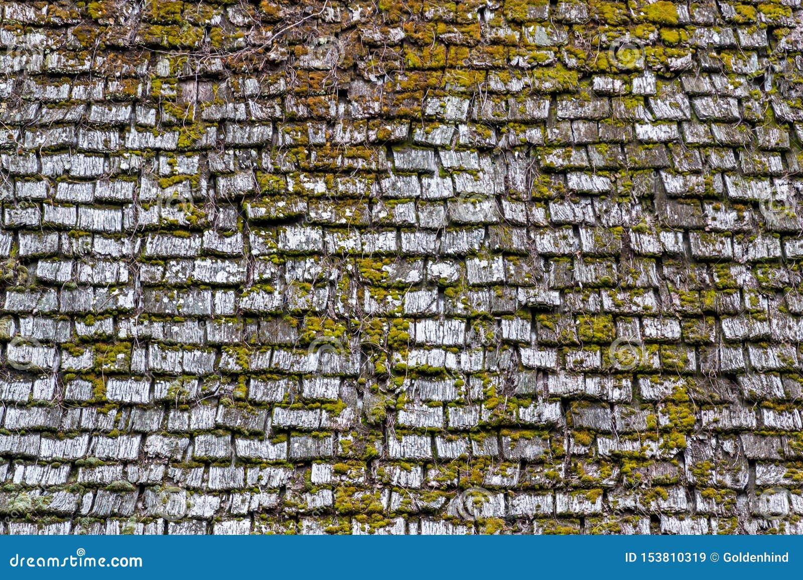 Старая деревянная поверхность крыши с зеленым мхом на ем текстура предпосылки