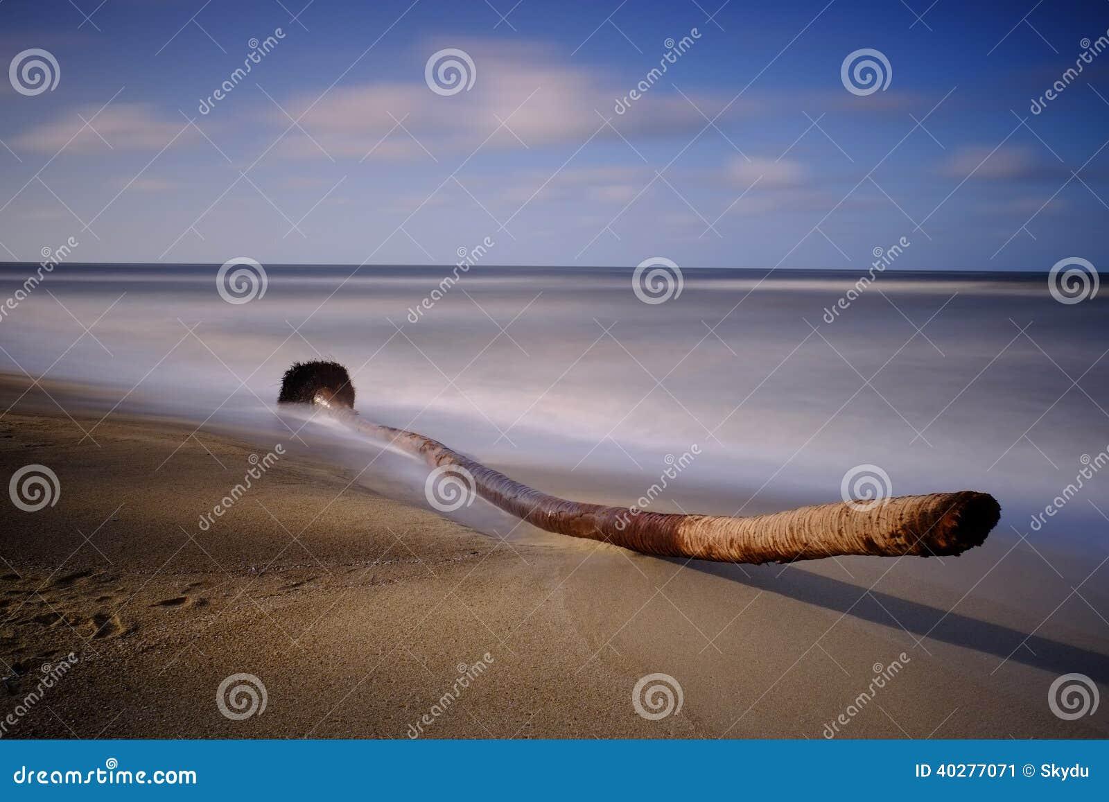 Старая древесина смещения пальмы
