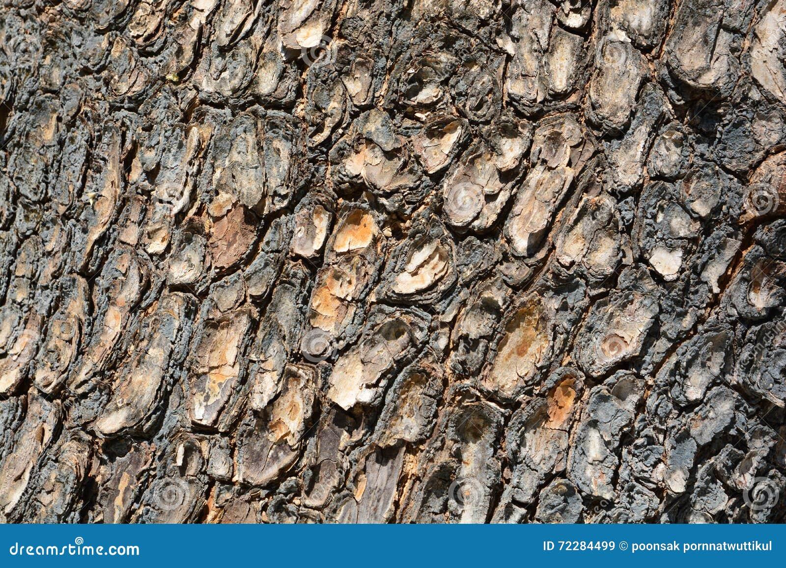 Download старая древесина текстуры стоковое изображение. изображение насчитывающей природа - 72284499
