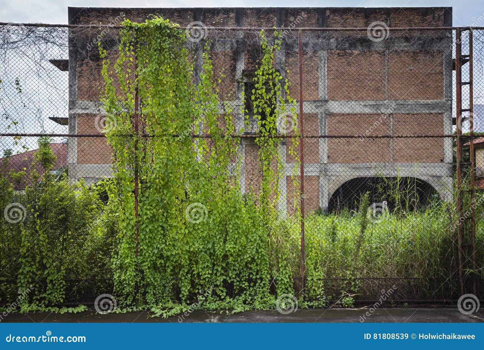 Старая стальная загородка покрытая с плющом перед домом глуши