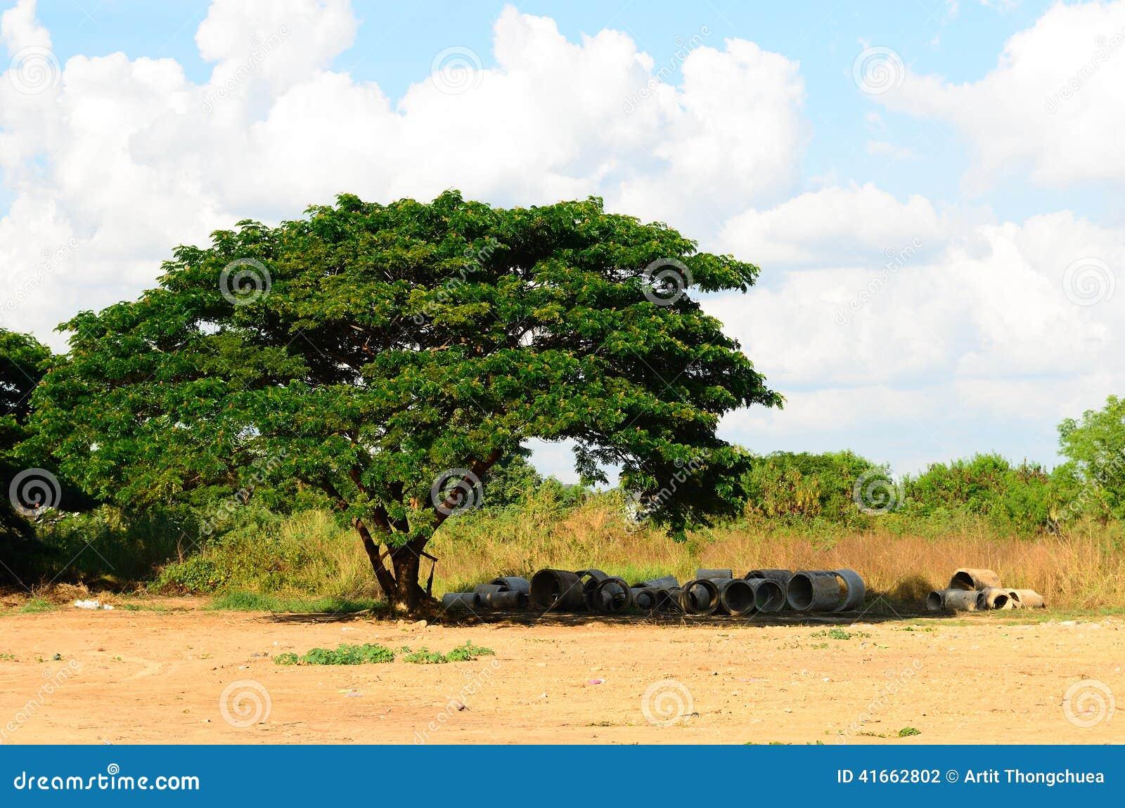Старое большое дерево под голубым небом, Таиландом