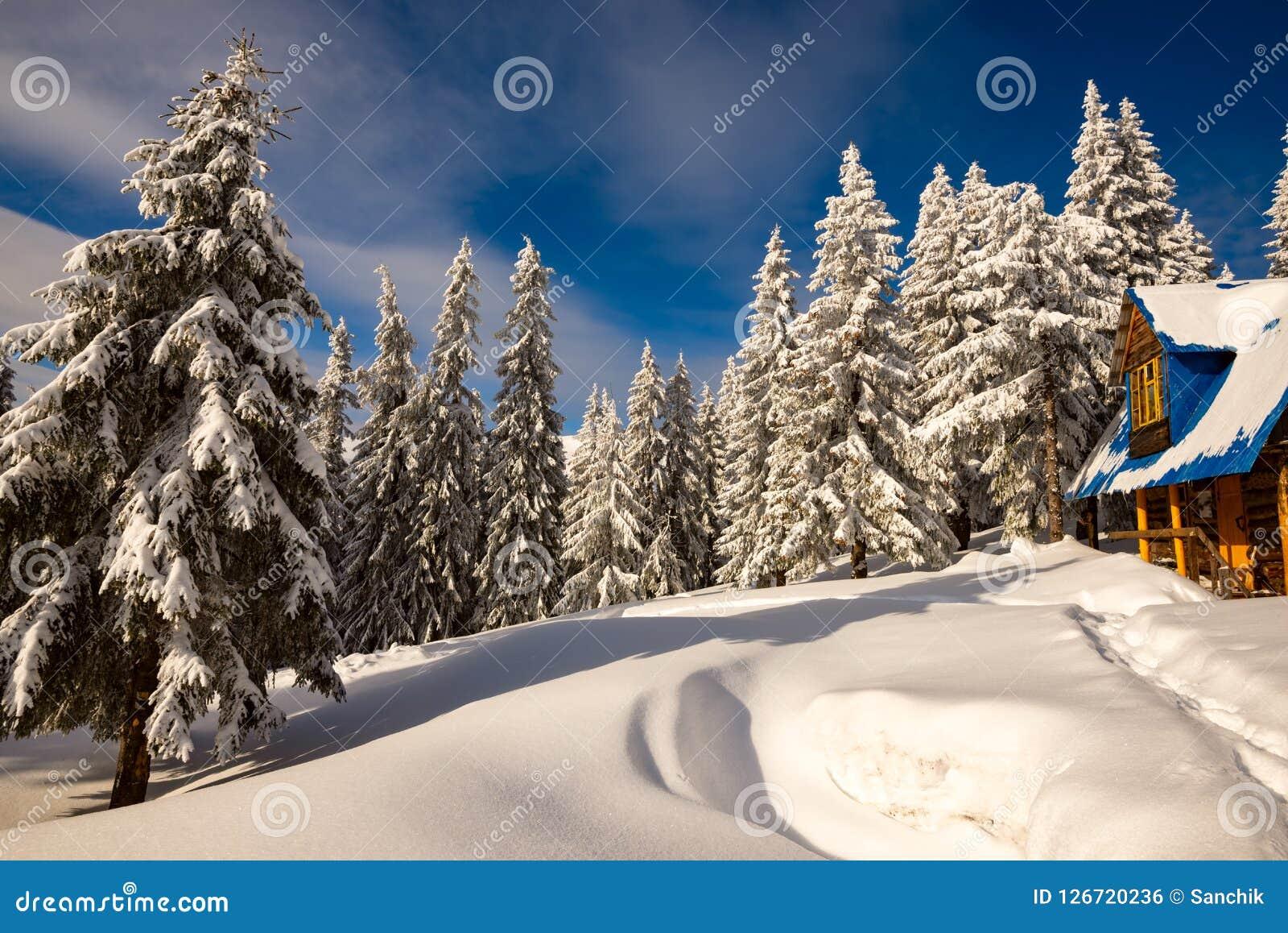 Старое деревянное укрытие среди огромных елей покрытых с снегом