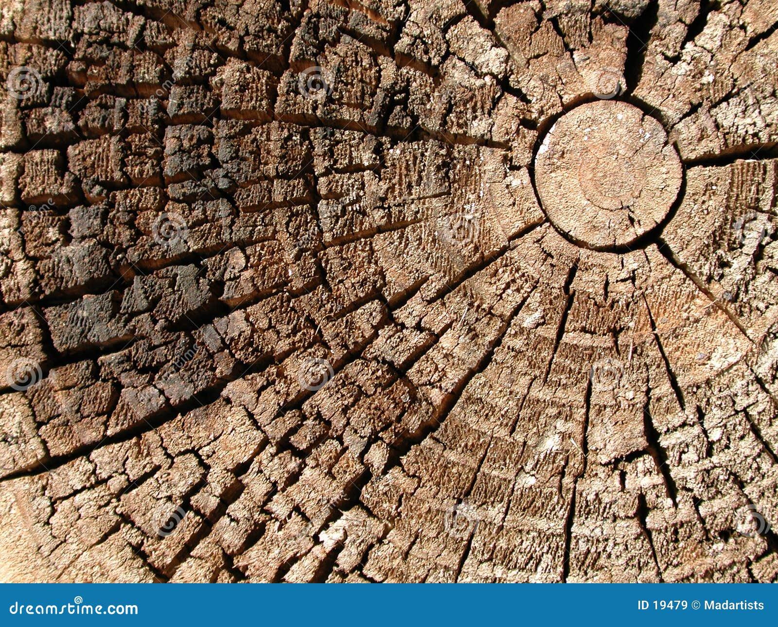 старые кольца текстурируют древесину вала