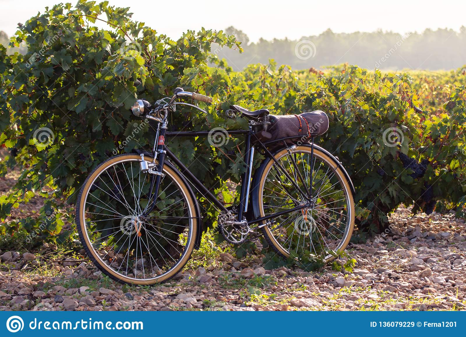 Старый велосипед в винограднике, на золотом восходе солнца в dels Alforins Fontanars, маленький город в провинции Валенсия, Испан