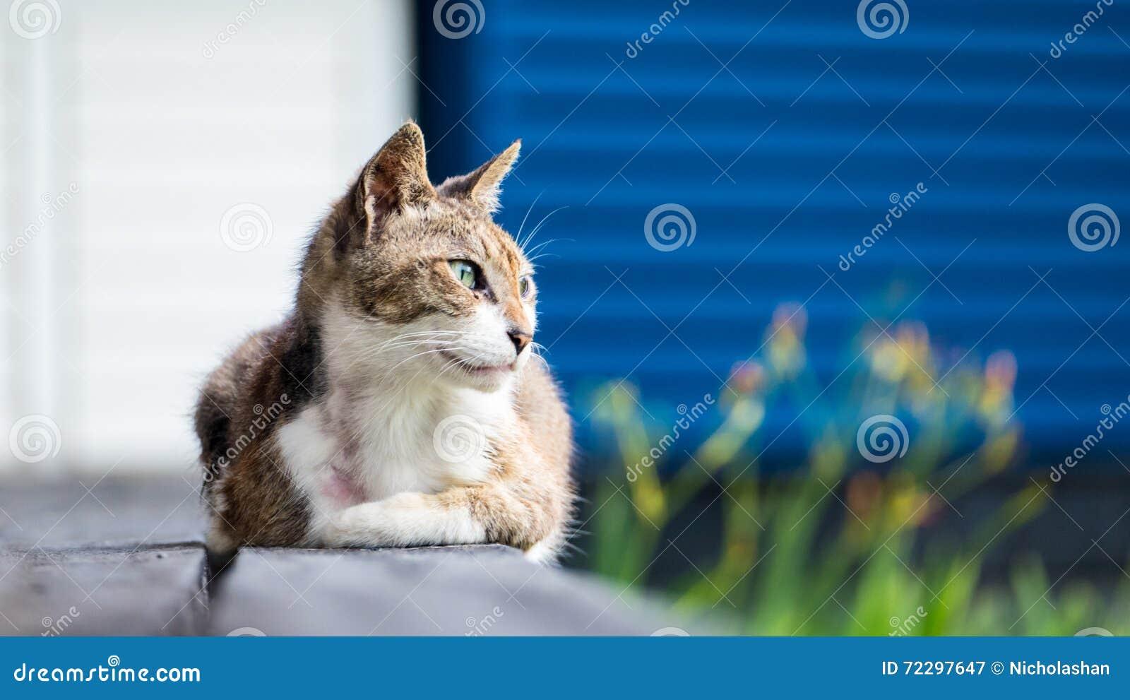 Download Старый кот спать на деревянном поле с предпосылкой нерезкости Стоковое Изображение - изображение насчитывающей волосы, старо: 72297647