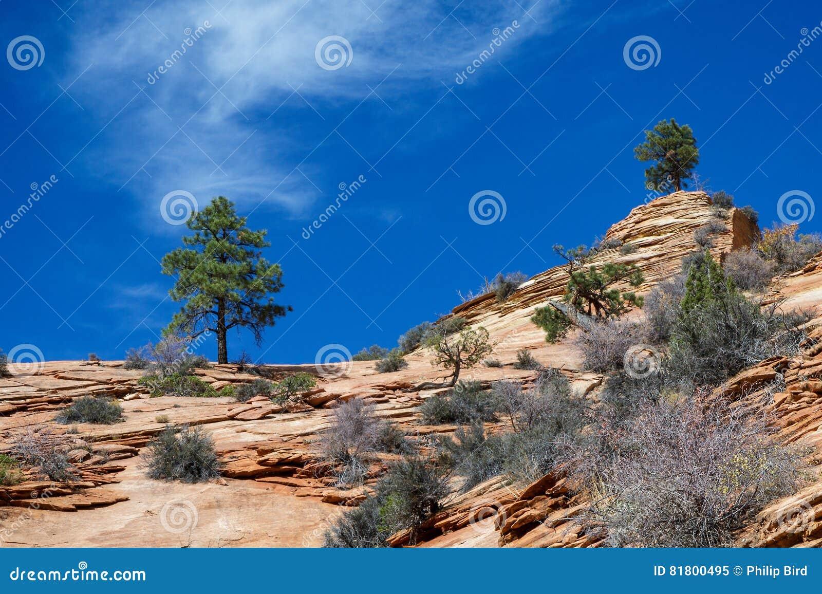 Старый Escarpment в Сионе