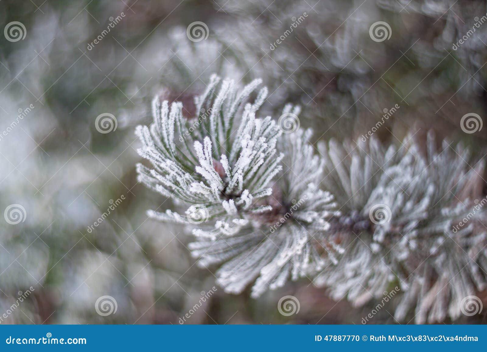 стали покрытая эстония имеет зиму снежка реки льда малую