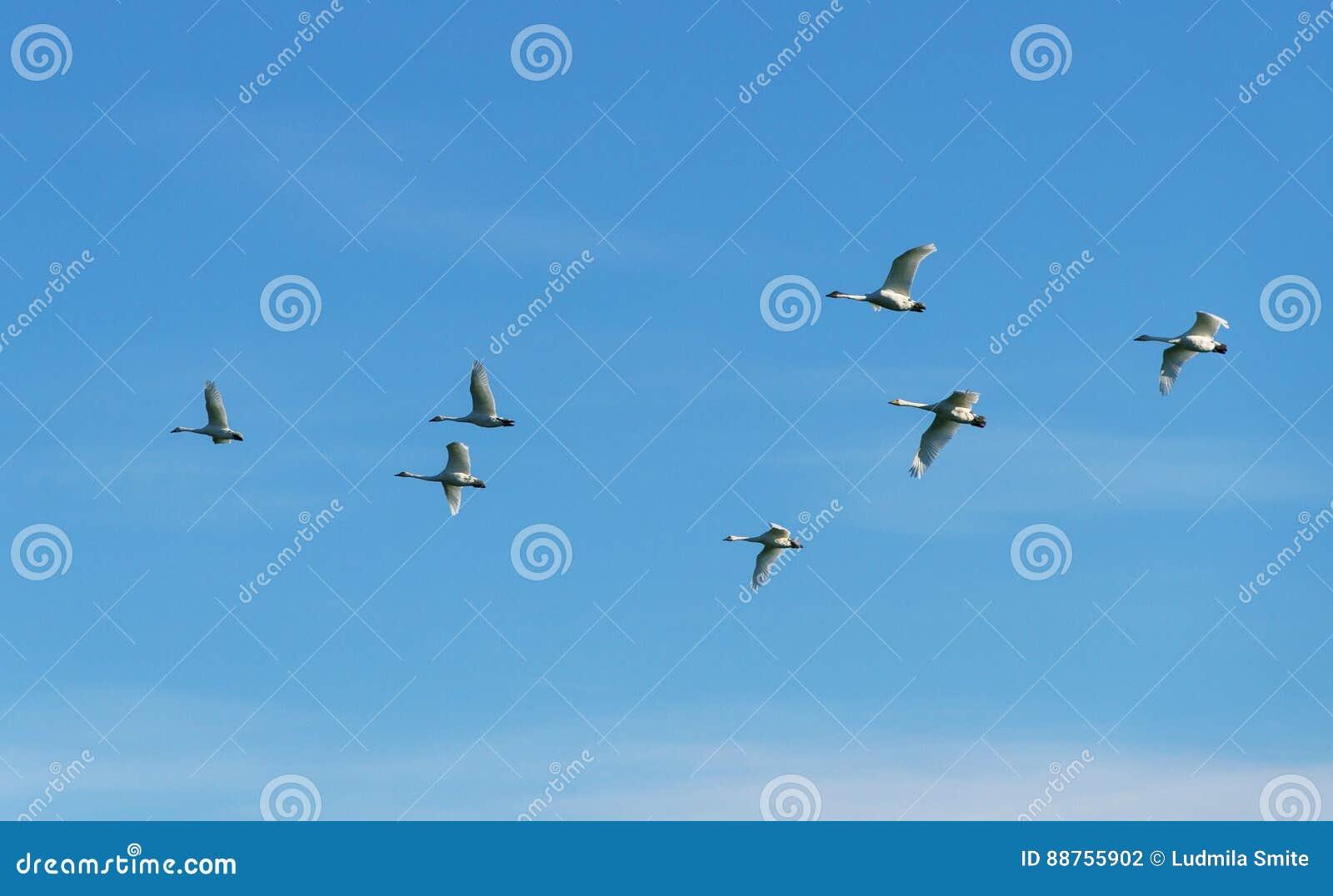 Стадо птиц в небе