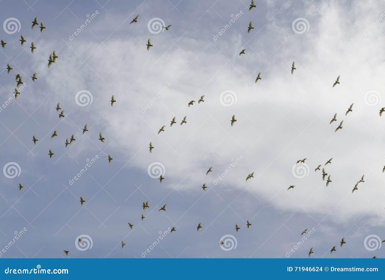 Стадо птиц против облачного неба