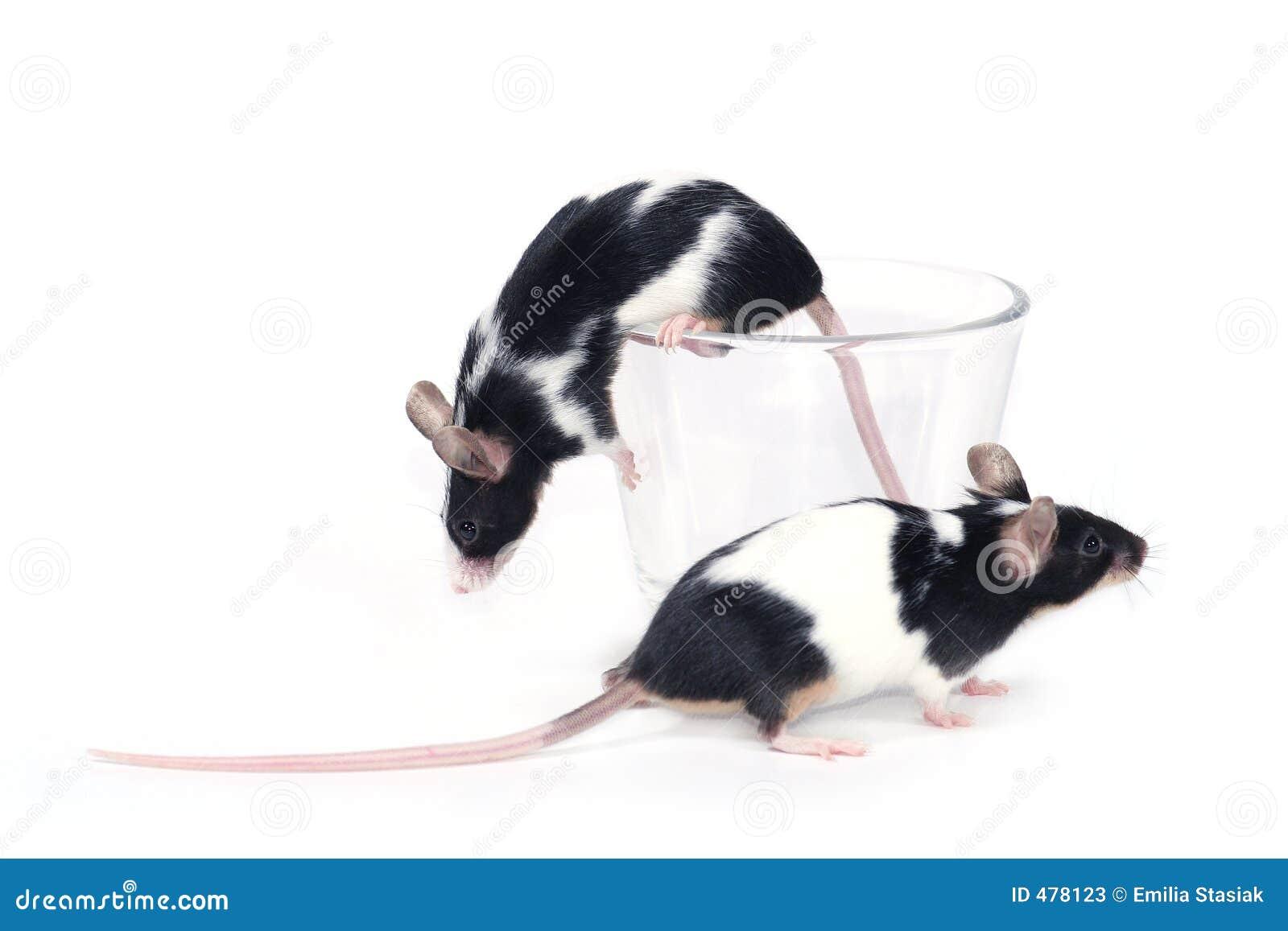 стеклянные мыши