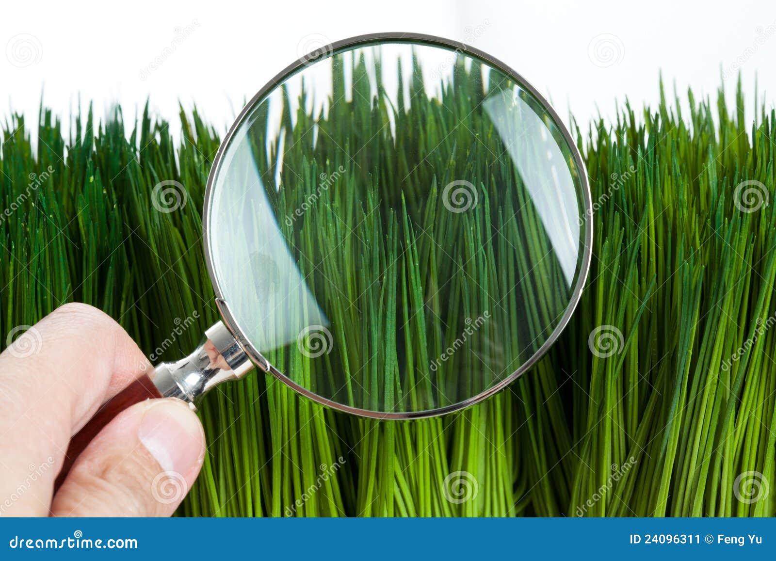 стеклянный увеличивать зеленого цвета травы