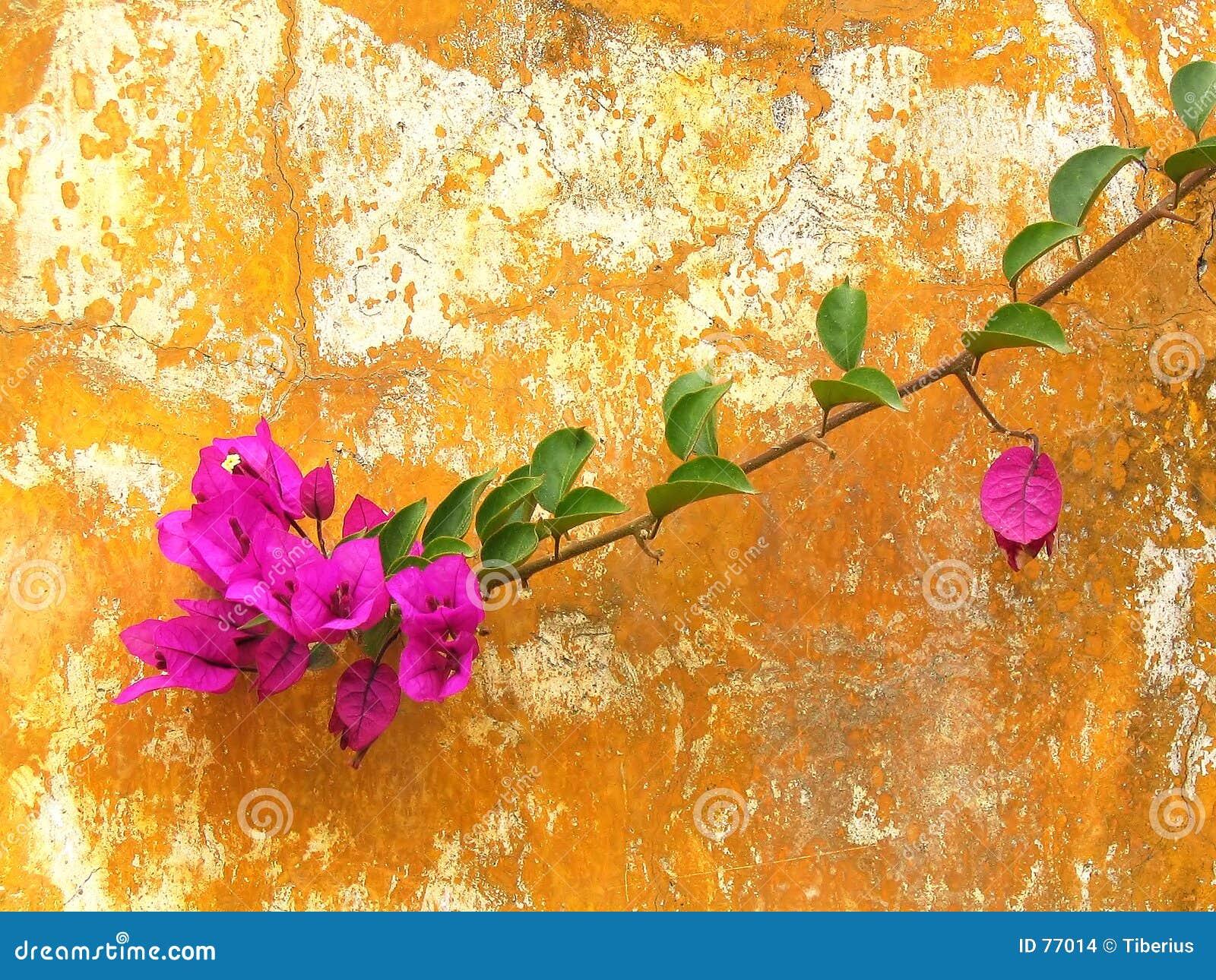 стена цветка ржавая