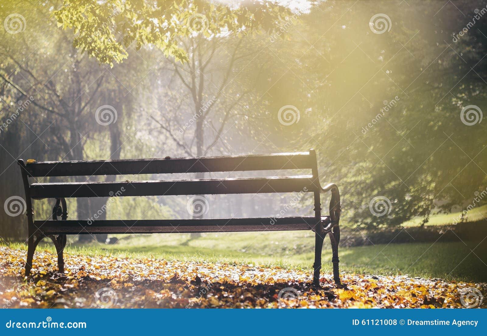 Стенд в парке города, золотом часе
