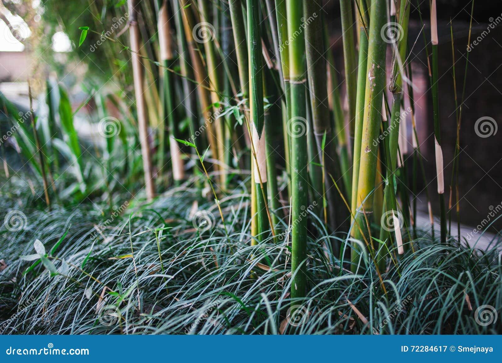 Download Стержни и листья бамбуковой текстуры Стоковое Изображение - изображение насчитывающей листво, непал: 72284617