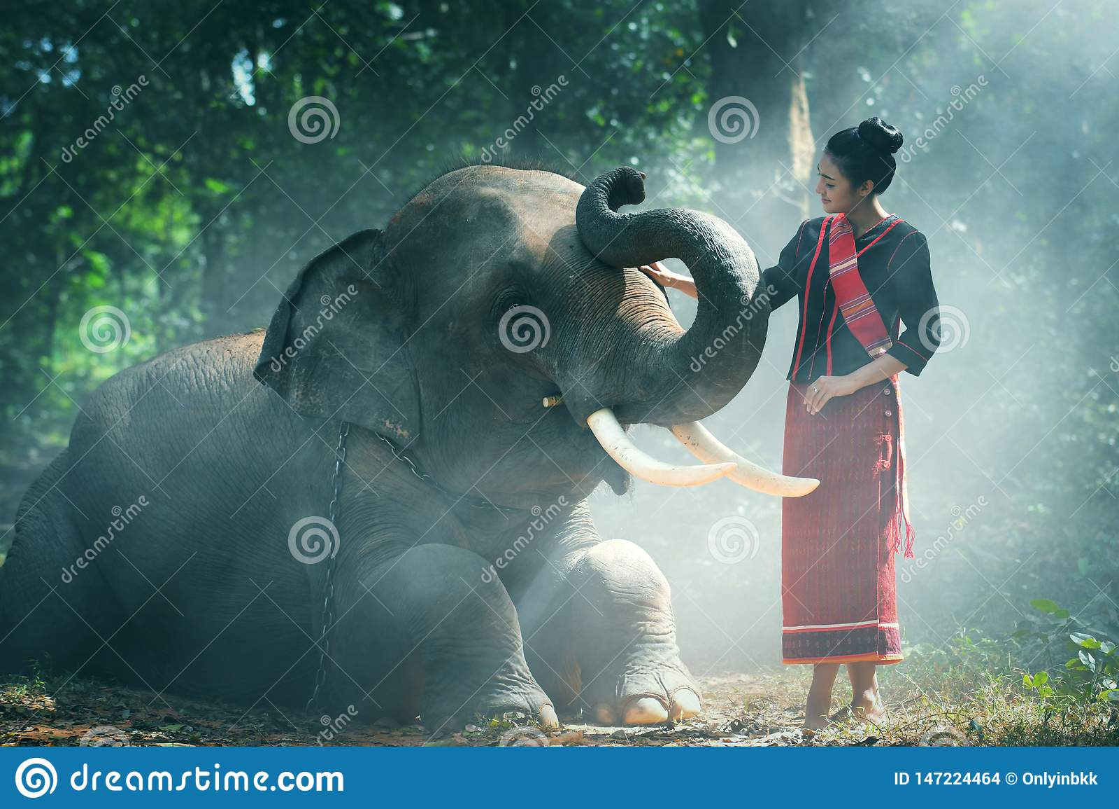 Стиль красивой молодой тайской женщины северо-восточный насладиться станцевать и сыграть со слоном в джунглях