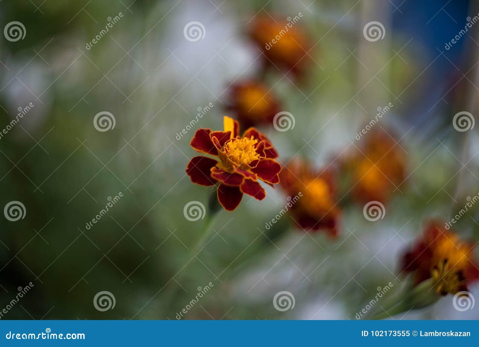 Стиль красных оранжевых цветков ретро снял с отмелым Dept поля