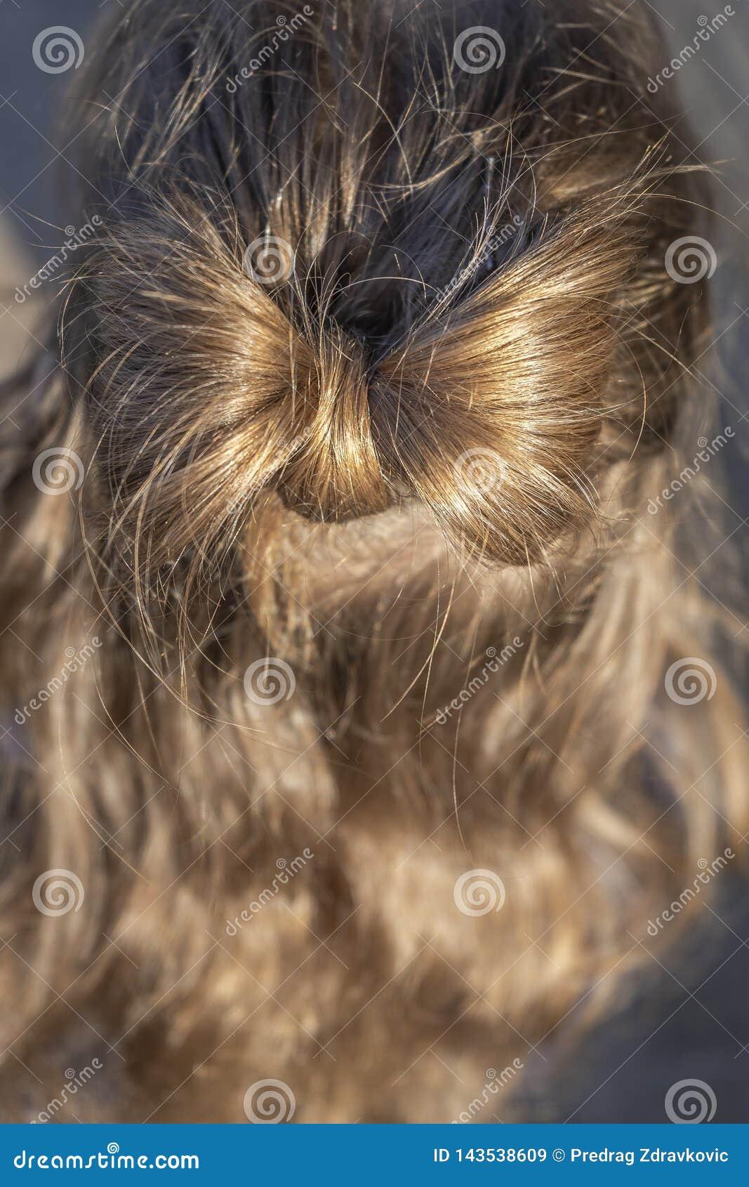 Стиль причесок со смычком в белокурой девушке