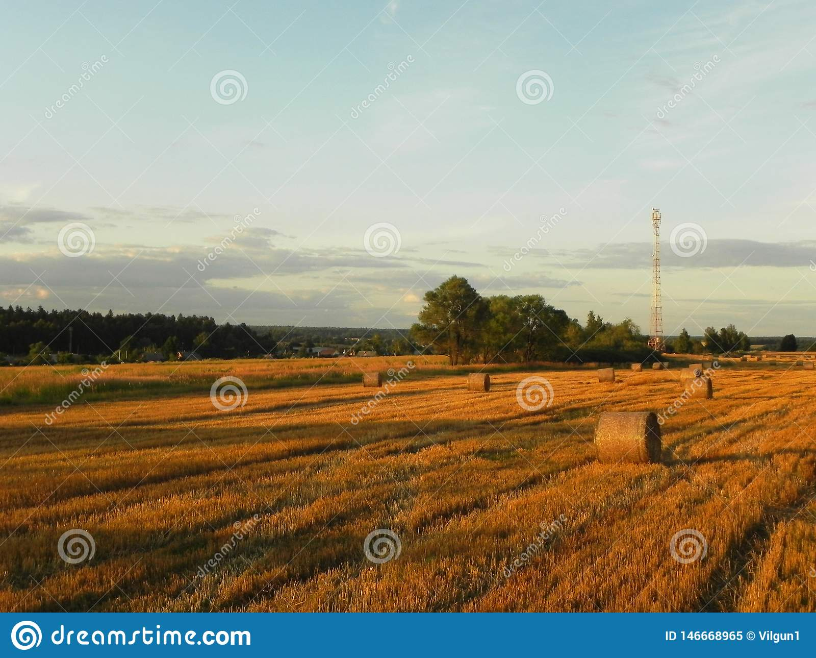 Стога сена на поле лета Сжатое сено на красивом поле лета o