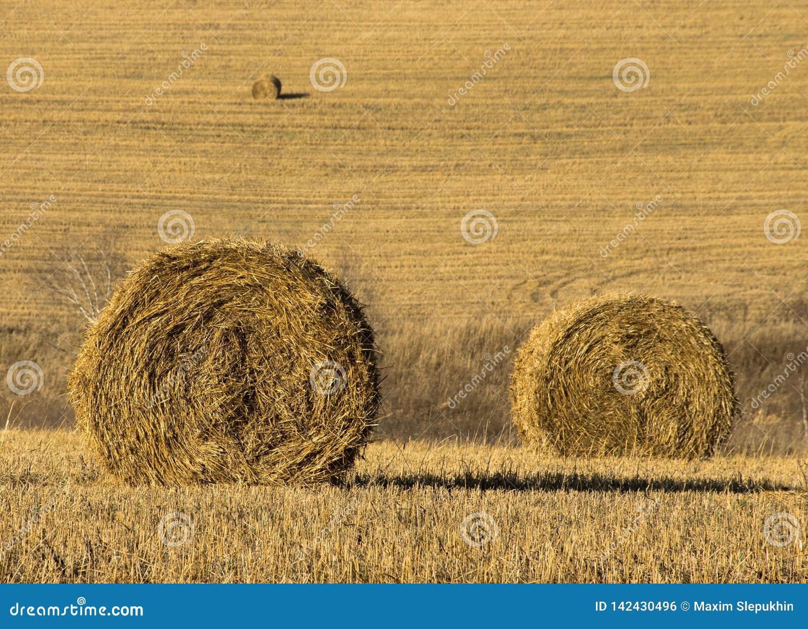 Стог сена в поле на солнечный день