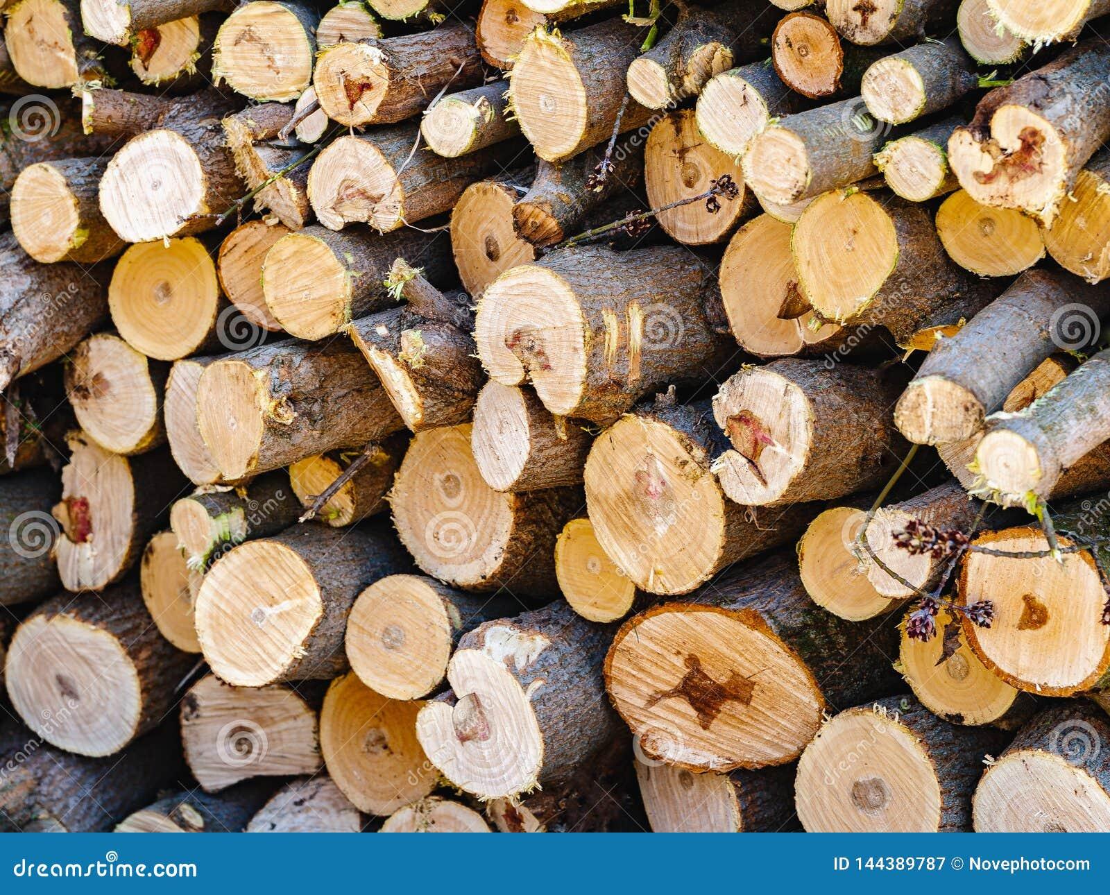 Стог спиленный швырком Куча прерванной древесины