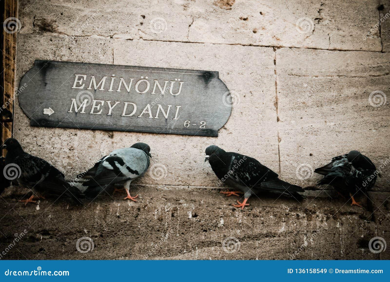Стойки голубей на каменной стене в индюке