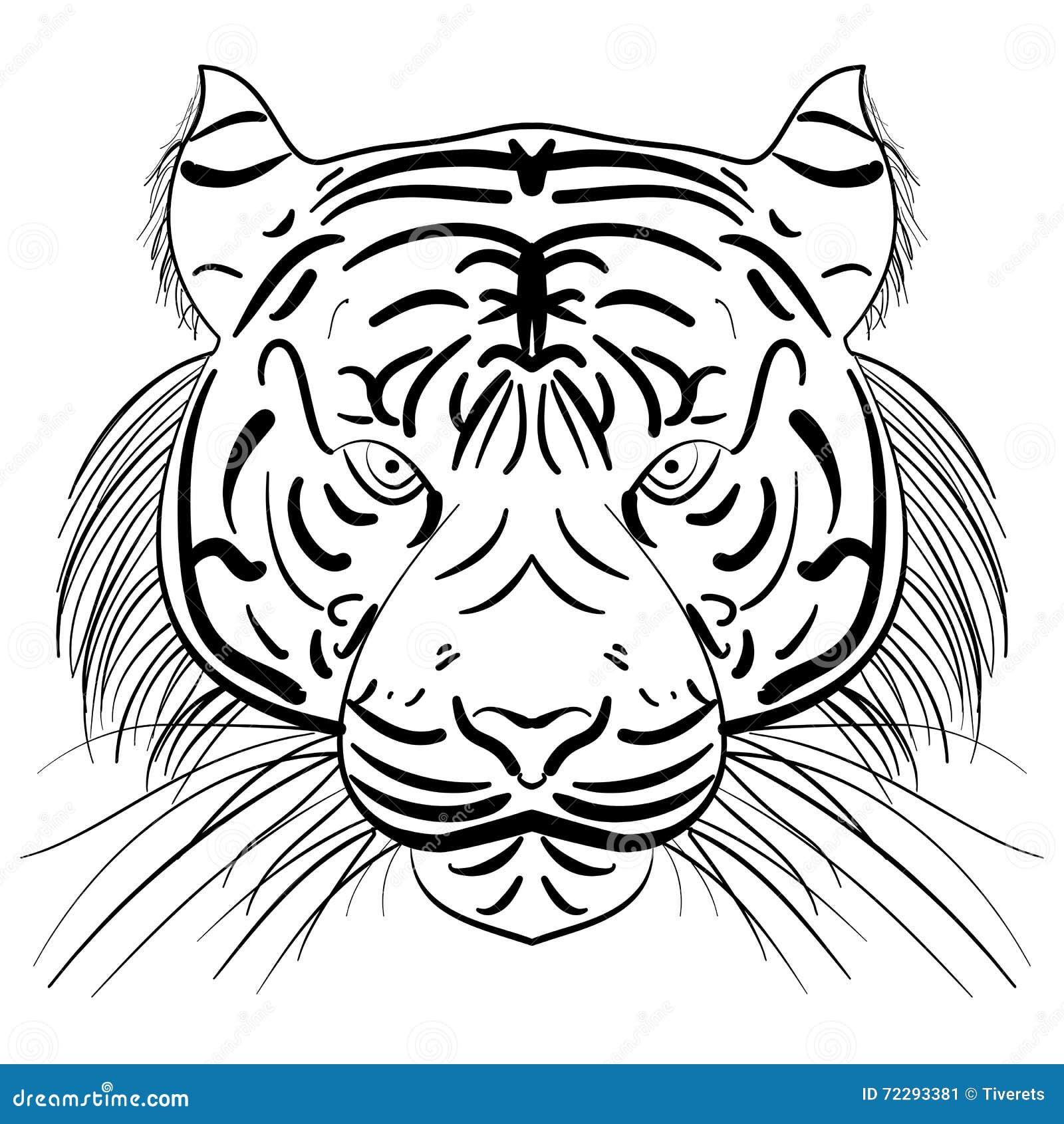 Download Сторона вектора стилизованная тигра эскиза чернил Иллюстрация вектора - иллюстрации насчитывающей шарж, опасность: 72293381